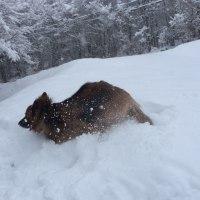 甘く見てた積雪