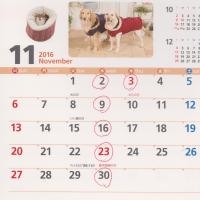 11月も暦通り、診療いたします。