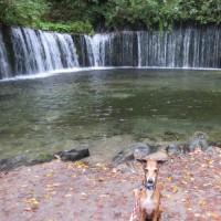 白糸の滝~ハルニレテラス♪
