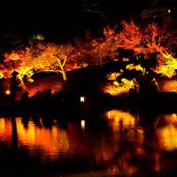 栗林公園 紅葉のライトアップ その2