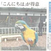 癒しの鳥たち