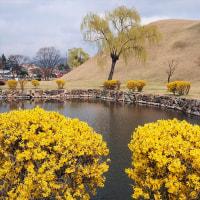 古墳公園・大陵苑(テヌンウォン)☆韓国の世界遺産・慶州歴史遺跡地区から