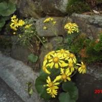 庭に咲いた花。