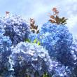 空色 紫陽花