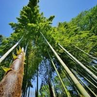 赤塚植物園と竹の子公園の竹林