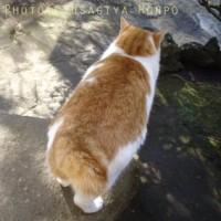 猫シッポ*さつまあげ型