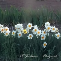 春爛漫の山郷