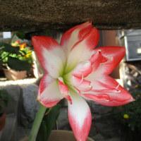 我が町のオーガニック菜園と花