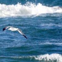 12/04探鳥記録写真(狩尾岬の鳥たち:ミサゴの狩り他)
