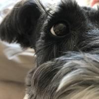 犬の白目の本当の意味…