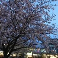 春の一大事!