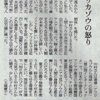 読売新聞記事「アフリカゾウの怒り」(2016年10月2日)