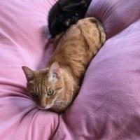 Taiga and Kiki were sleeping together.