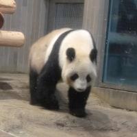 パンダ 🐼
