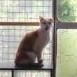 猫の大引っ越し 事件続発!