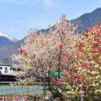 木曽路の春景色