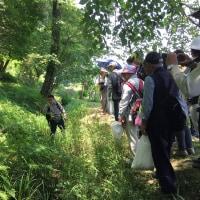 百草山野草観察会2017レポート