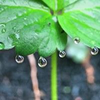 雨の日おしゃれ