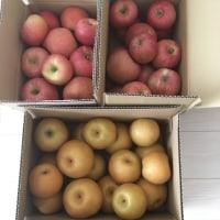 今年も林檎と梨たくさん頂きました〜♪