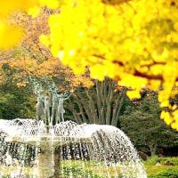 昭和記念公園の秋 5