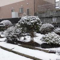 突然の雪が・・・いわき