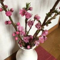 桃の花を愛でながら感じること