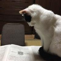 くーさん、英語問題を考える