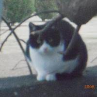 続 「野良猫達の 挽歌」  命のブルース
