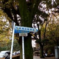 ミニベロ小旅行(多摩湖自転車道)