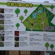 ●金沢・北部公園の蓮 ハス ヒマワリなど