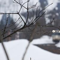 樹雨(きさめ)