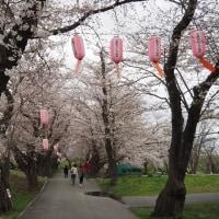 遠野の桜開花はいつ?