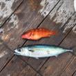 三重県漁市丸‼️8月6日スーパーライトジギング出船決定‼️日の出から出船‼️