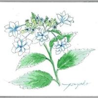 星型の花が かわいい~