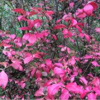 内記国営農地花木園にも秋がきました。