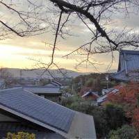 哲学の道、晩秋 (熊野若王子神社訪問含む)