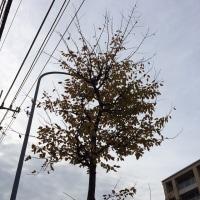 今朝の曇り空と枯葉の様子です。