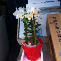スイート バジルの花が!