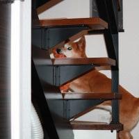 駆けのぼっていた階段