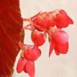 7/25 今日の花たち・・・