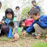 春の野鳥と自然観察会。(4/22*土)