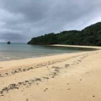 南ぬ島の小さな生き物・浜辺編