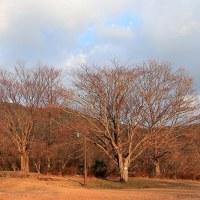 春を待つ冬木立