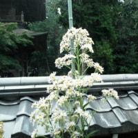 円覚寺に花の寺「松嶺院」