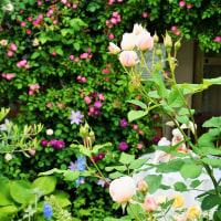 植物が織りなす色とコントラスト