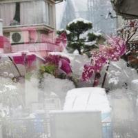 東京は朝からの雪、写真遊びのチャンス