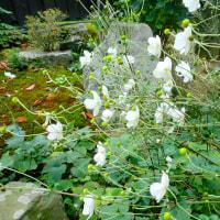 ~~~ 小さい小さいお花たち~~~