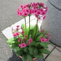 内浦公民館の花