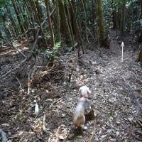 男鈴山・女鈴山にルーさんと登る。