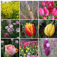 2007-02-20花の美術館。 チューリップも咲く頃になりましたね。